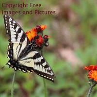 Copyright Free Images and Pictures
