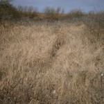 Dunes Rabbit trail