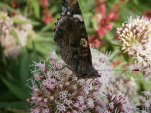 Floral Wild flowers butterfly