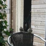 bidrs sparrow mus vogel