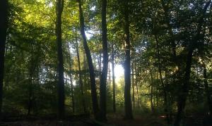 Trees tree autumn herfst boom