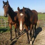 horses coral paard bak