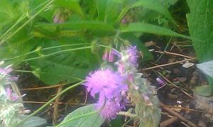 flower, wild flower