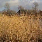 Netherlands Nederlands landschap