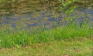 Wild flowers creek