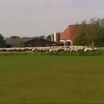 Dutch scenery nederlands landschap