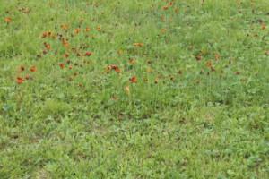 swallowtail-butterflies