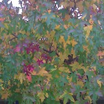 tree autumn herfst boom