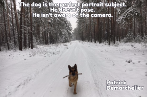 The_dog_is_the_perfect_subject_get_stencil