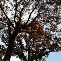 Tree, boom