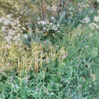 Wild flowers 24